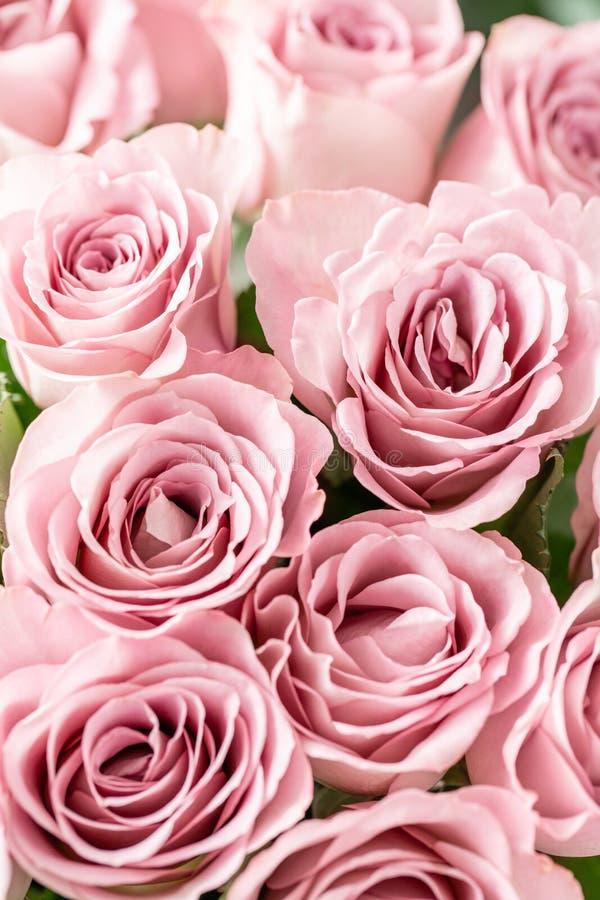 Rosas cor-de-rosa nos vasos de vidro Cor pastel do grupo o conceito de um florista em um florista wallpaper fotografia de stock