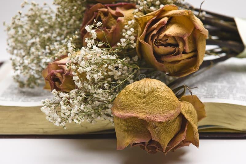 Download Rosas cor-de-rosa secadas imagem de stock. Imagem de flores - 16859013