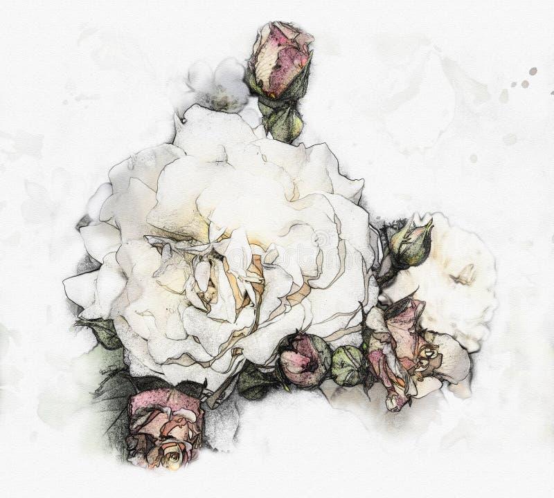 Rosas da aquarela ilustração do vetor