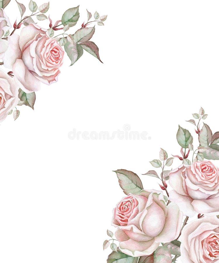 Rosas da aquarela no fundo branco Frame floral ilustração royalty free