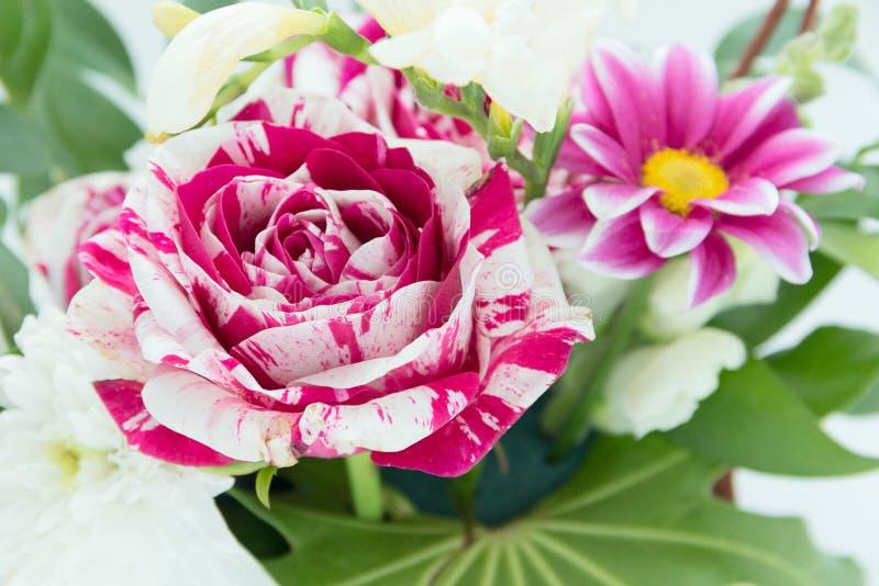 Rosas da flor fotos de stock royalty free
