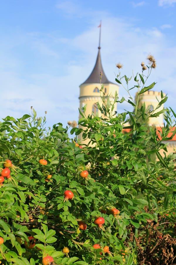 Rosas de arbusto e castelo velho imagens de stock