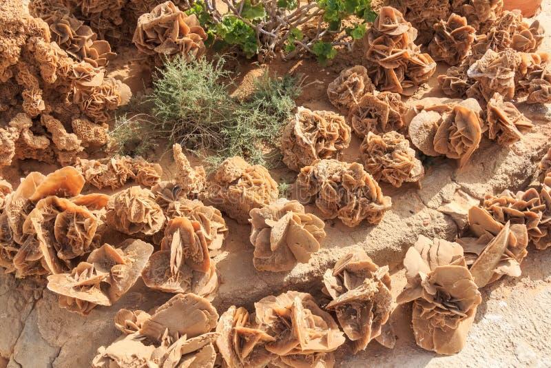 Rosas de deserto de pedra fotos de stock