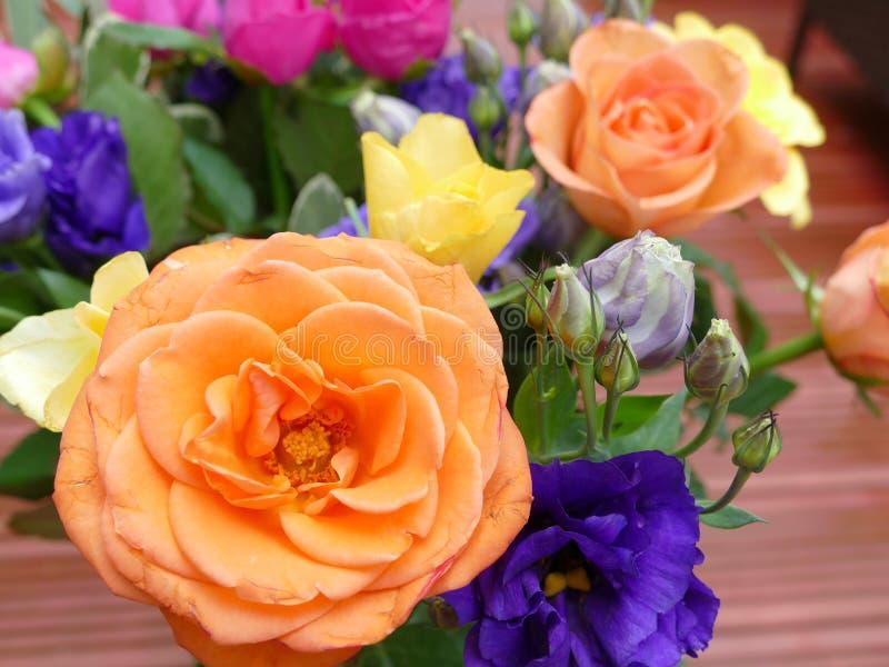 Rosas de florecimiento hermosas del coulorfull imagenes de archivo
