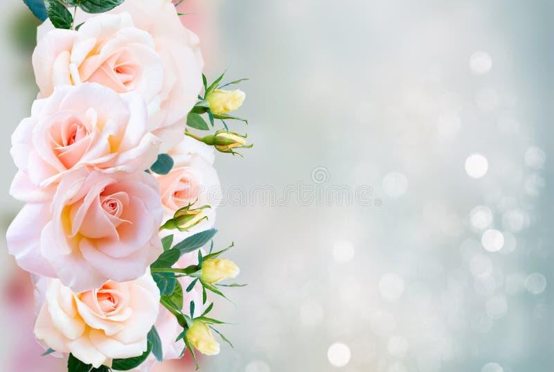 Rosas de florescência cor-de-rosa ilustração royalty free