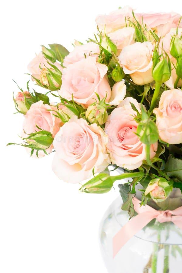 Rosas de florescência da violeta fotografia de stock royalty free