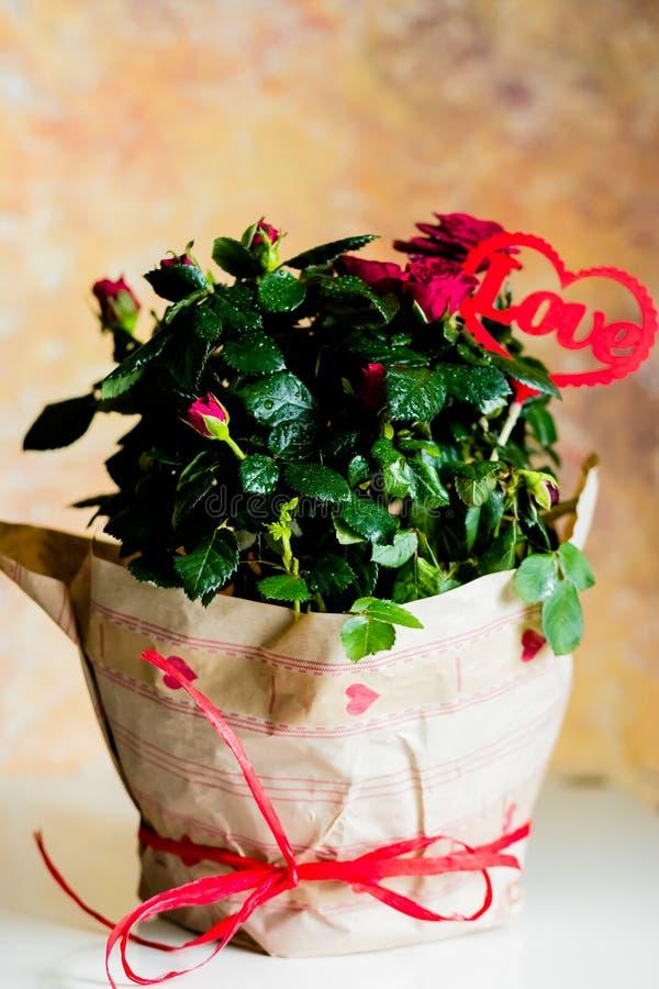 Rosas de florescência no potenciômetro de flor, mensagem do amor, coração vermelho Flores envolvidas no papel bonito com curva e  foto de stock