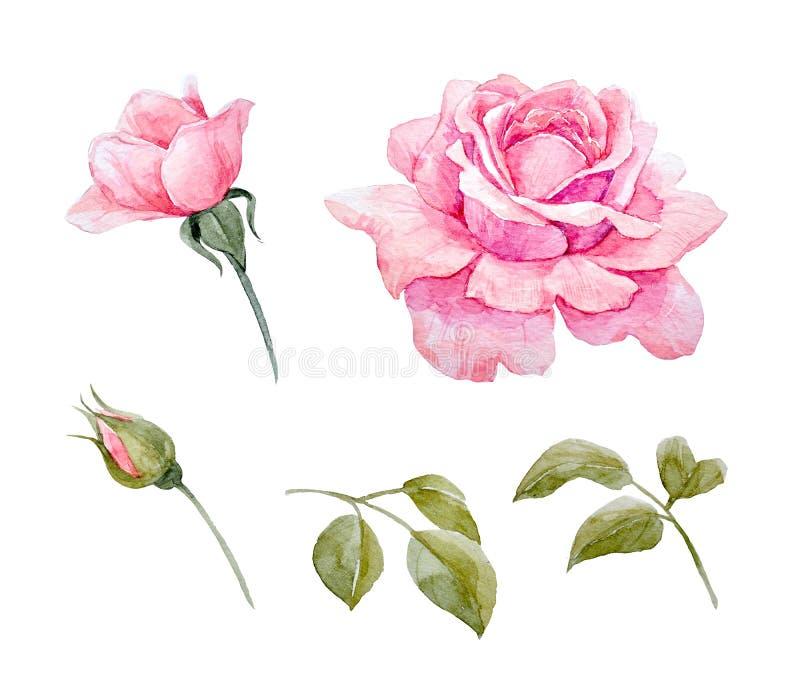 Rosas de la acuarela fijadas ilustración del vector