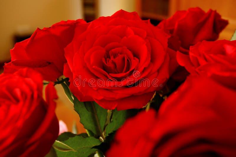 Rosas de la flor foto de archivo