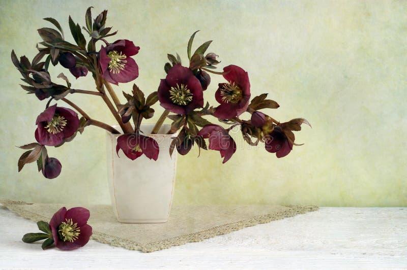 Rosas de la Navidad foto de archivo libre de regalías