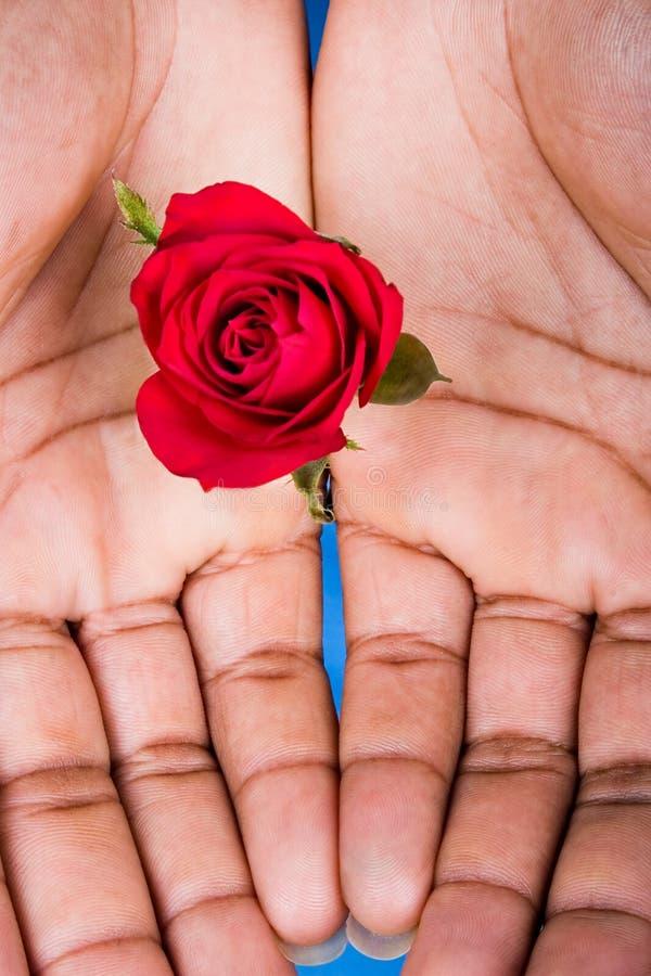 Rosas de la tarjeta del día de San Valentín imagenes de archivo