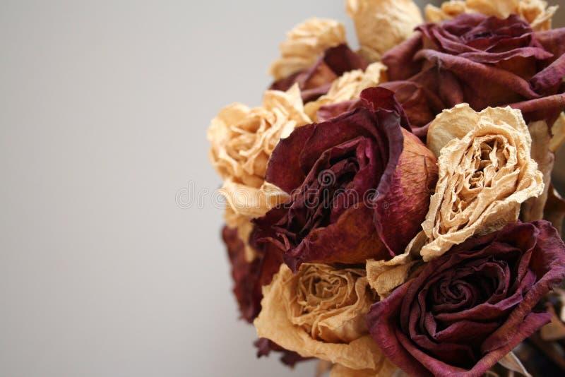 Rosas de muerte fotos de archivo libres de regalías