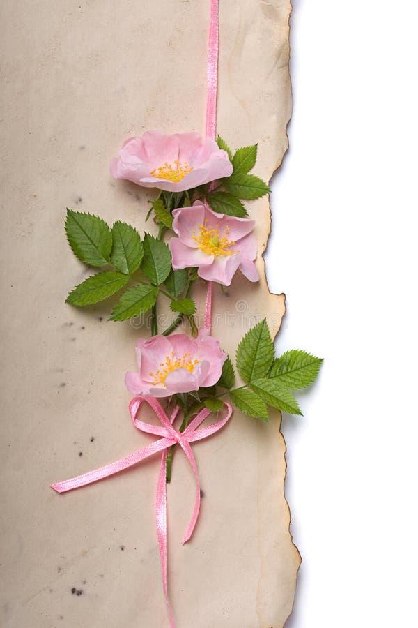 Rosas de perro en el papel envejecido libre illustration