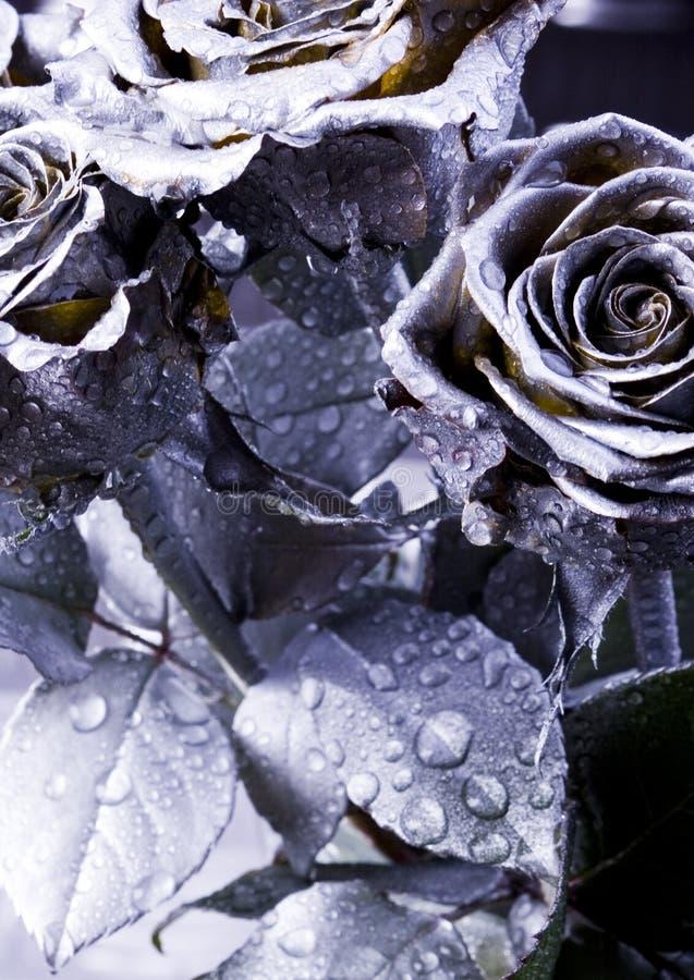Rosas de plata foto de archivo