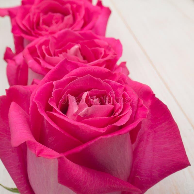 Rosas de té híbridas rosadas foto de archivo libre de regalías