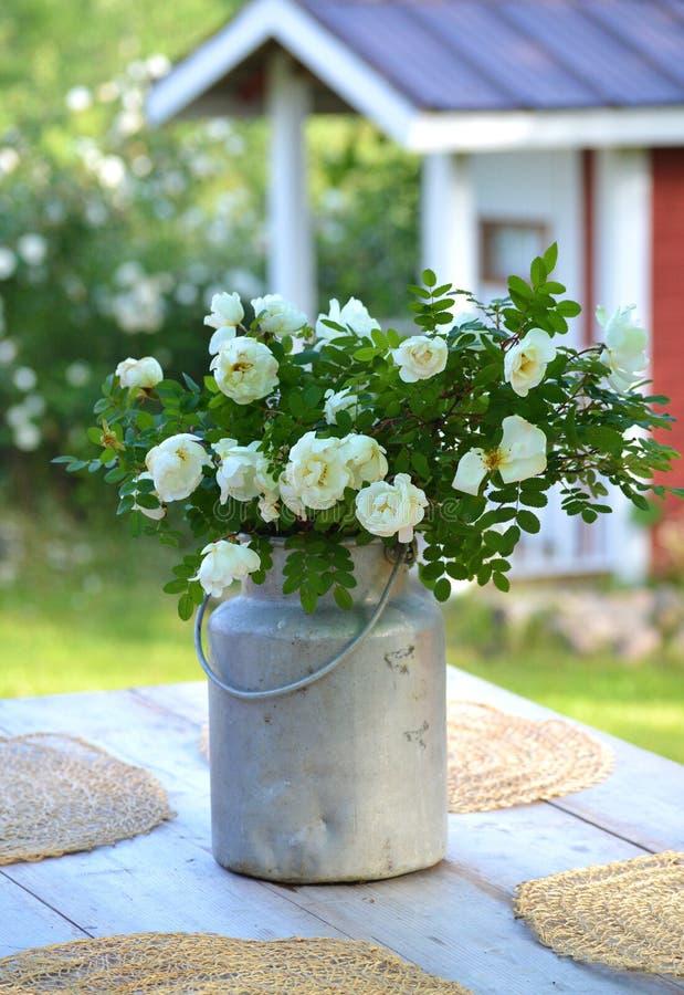 Rosas del pleno verano en una mantequera de leche vieja imagen de archivo