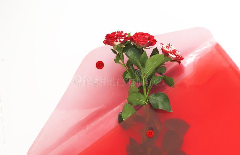 Rosas del rosa del regalo en sobre rojo en el fondo blanco fotos de archivo libres de regalías