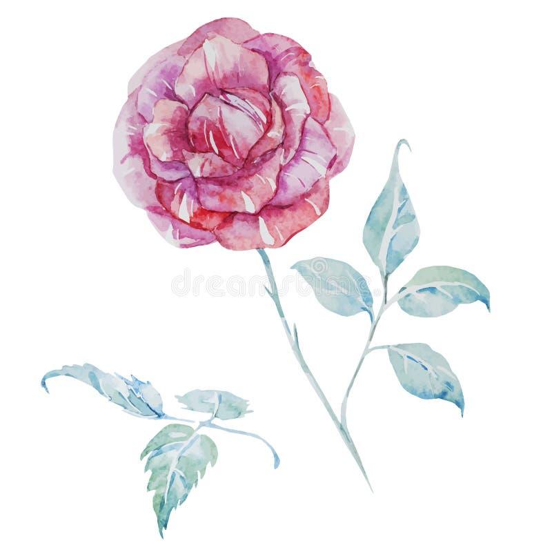 Rosas del vector de la acuarela stock de ilustración
