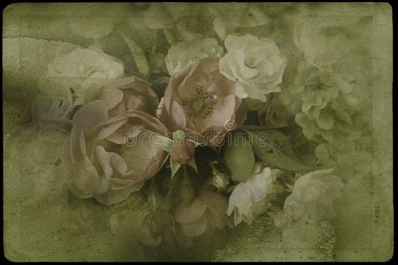 Rosas del vintage foto de archivo libre de regalías