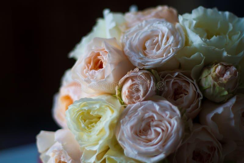 Rosas delicadas florecientes del verano en fondo festivo floreciente de las flores foto de archivo