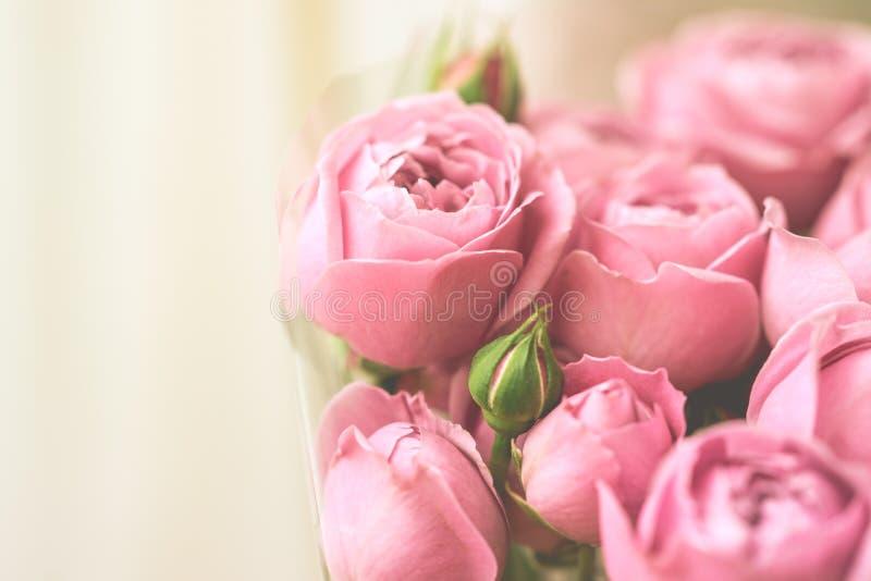 Rosas delicadas pálidas de la peonía del primer Foco selectivo, luz mágica foto de archivo libre de regalías