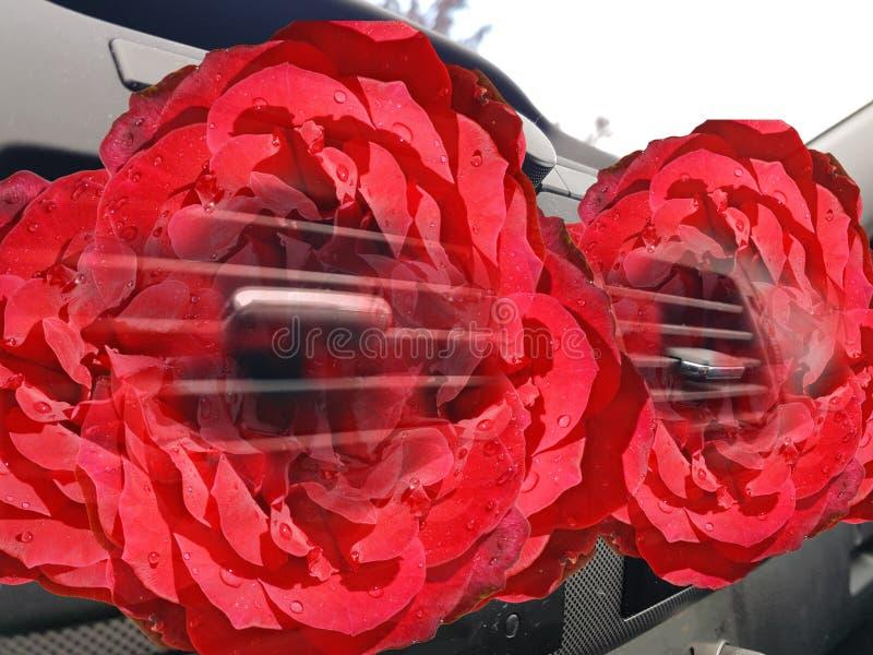 Rosas do aircondition dos condutores do ar do carro vermelhas dentro do backround imagens de stock royalty free
