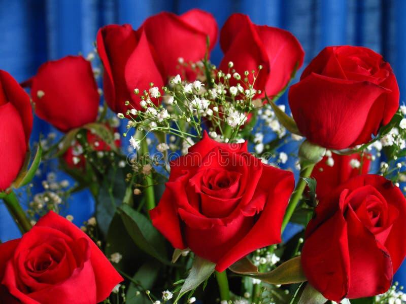 Rosas do aniversário fotografia de stock
