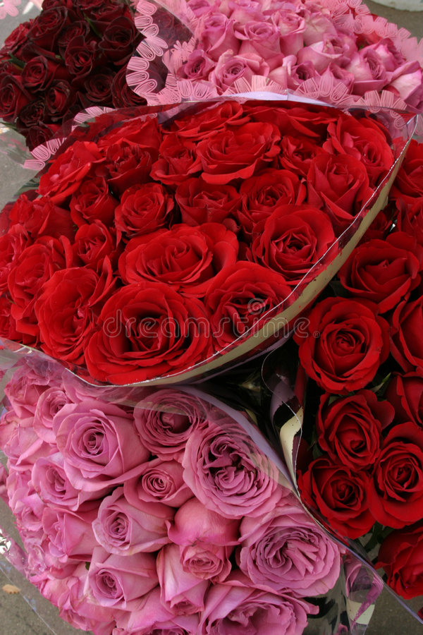 Rosas do dia do Valentim imagem de stock royalty free