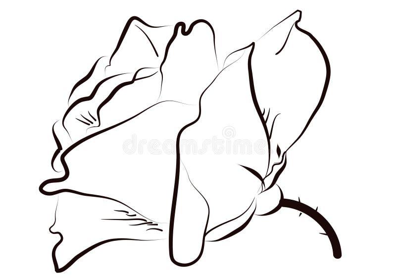 Rosas do esboço ilustração do vetor