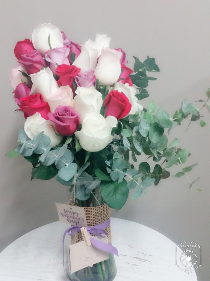 Rosas do presente do aniversário & do amor foto de stock royalty free