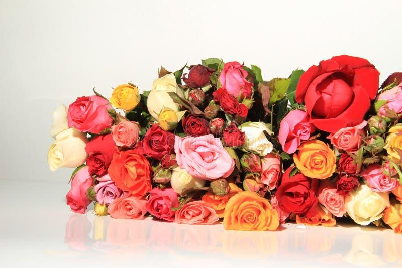 Rosas Do Romance Fotos de Stock