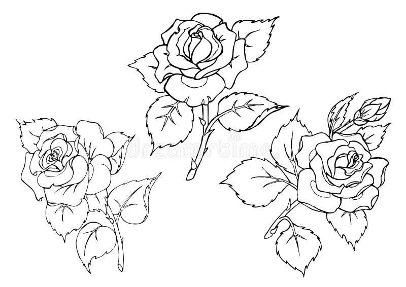 Rosas do vetor. Traço de desenho da carta branca. ilustração royalty free
