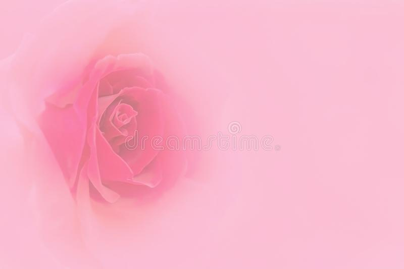 Rosas dulces borrosas del color en el estilo suave para el fondo fotografía de archivo
