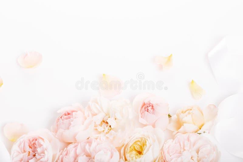 Rosas dulces de la tela del color en el estilo suave para el fondo fotos de archivo libres de regalías