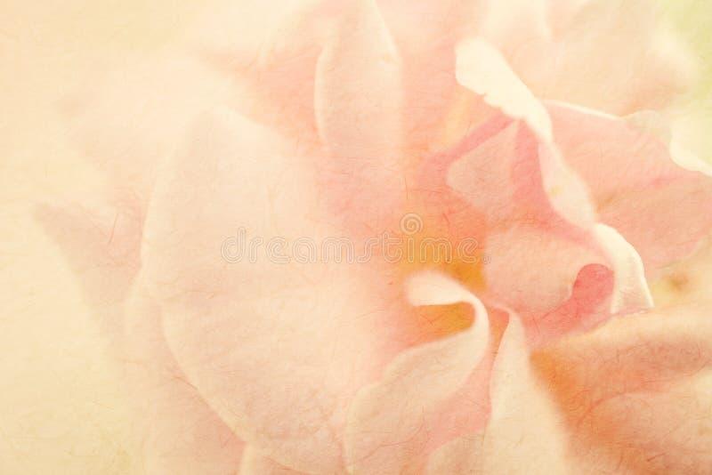 Rosas dulces del color en estilo suave del color y de la falta de definición en textura del papel de la mora imagen de archivo libre de regalías