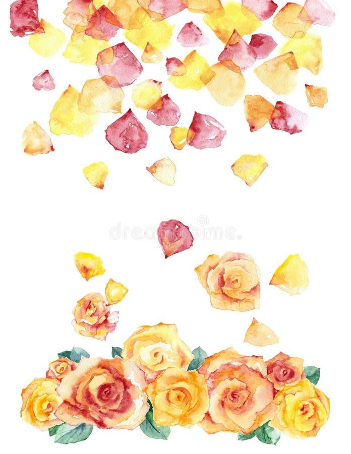 Rosas e pétalas da aquarela ilustração stock