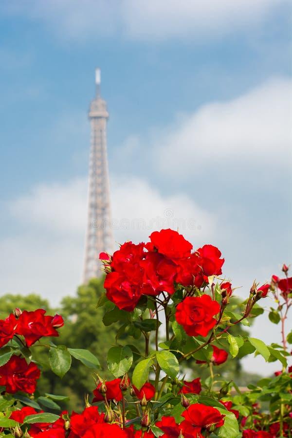 Rosas e torre Eiffel, Paris, França fotografia de stock