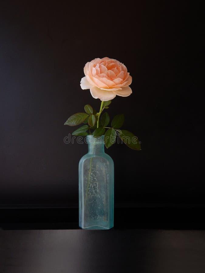 Rosas en botella foto de archivo libre de regalías
