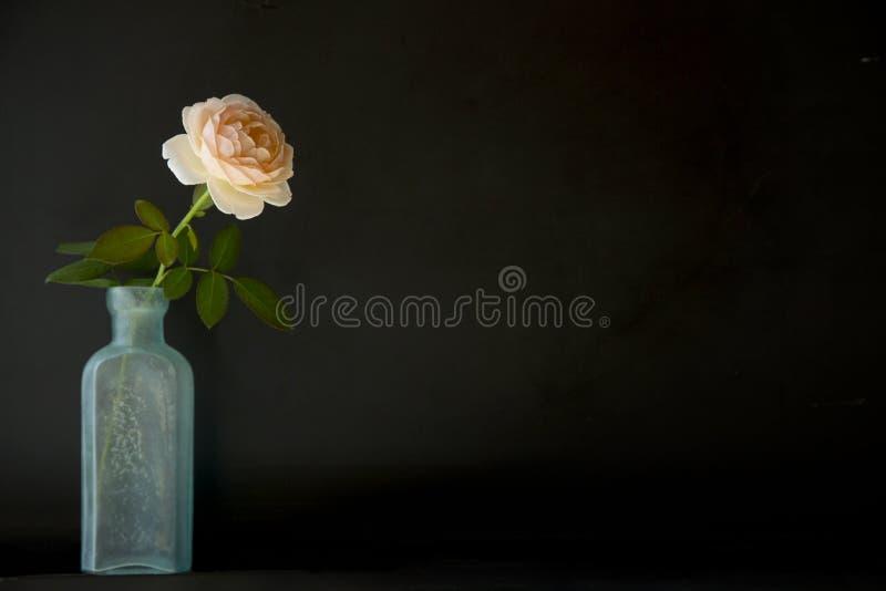 Rosas en botella imagenes de archivo