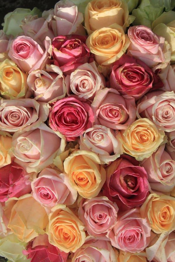 Rosas en colores pastel imagen de archivo libre de regalías