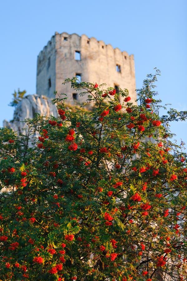 Rosas en el castillo de la bella durmiente - torre fotos de archivo libres de regalías