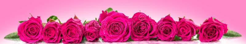 Rosas en fila imágenes de archivo libres de regalías
