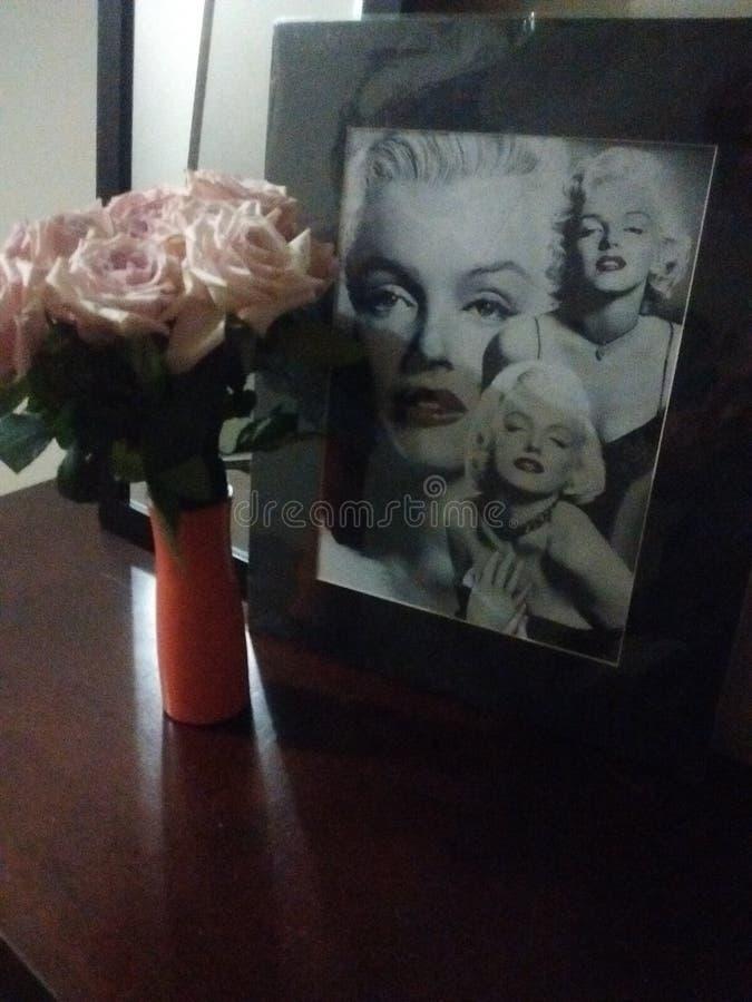 Rosas ensolaradas mais brilhantes foto de stock royalty free