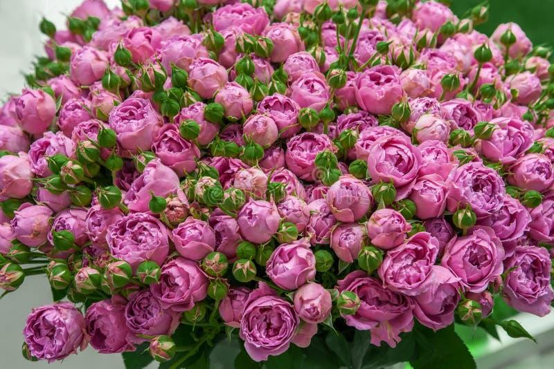 Rosas exóticas de variedades modernas de la élite de la lila en el ramo como regalo Fondo Foco selectivo fotos de archivo