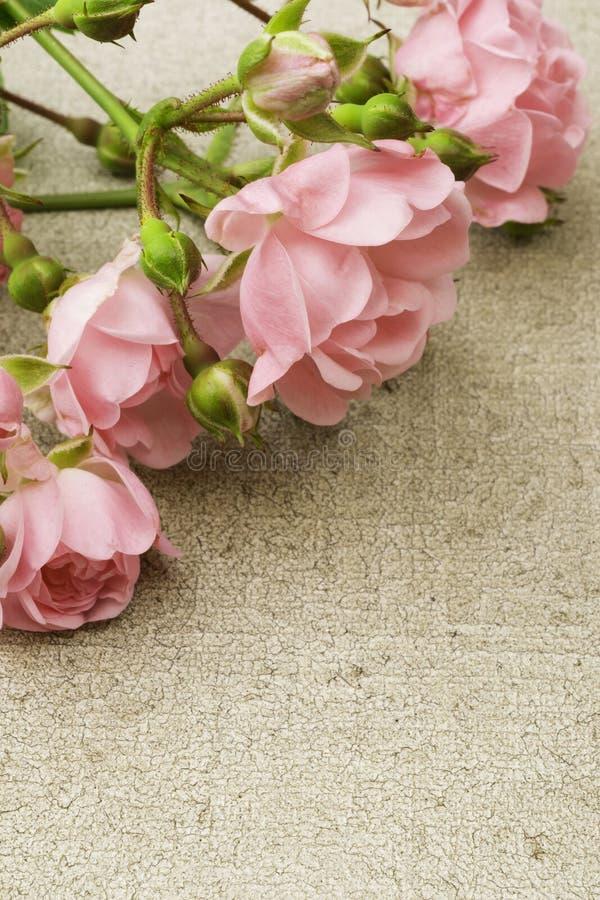 Rosas feericamente fotografia de stock royalty free