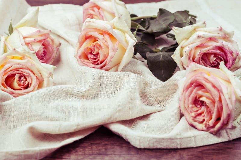 Rosas frescas do filtro do vintage imagem de stock