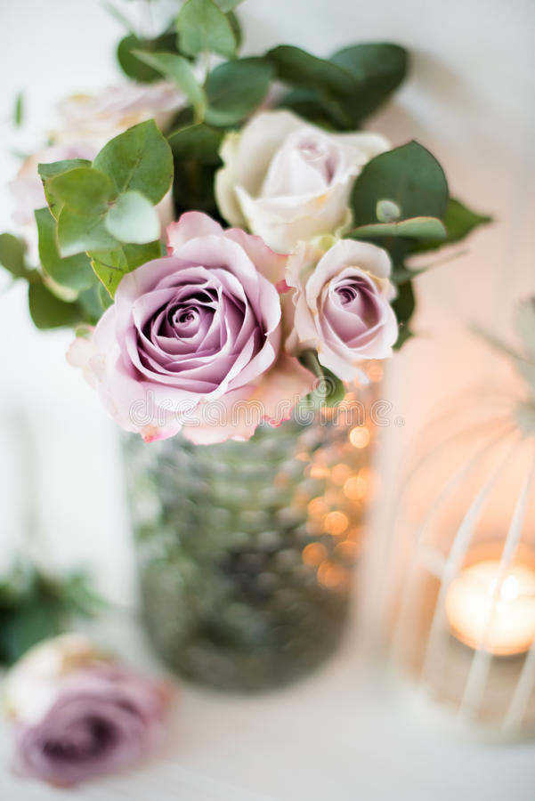 Rosas frescas do verão da cor roxa, malva no vaso com parede branca b fotografia de stock