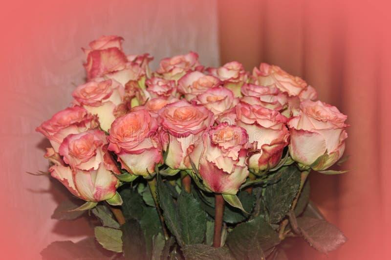 Rosas grandes do rosa do grupo foto de stock
