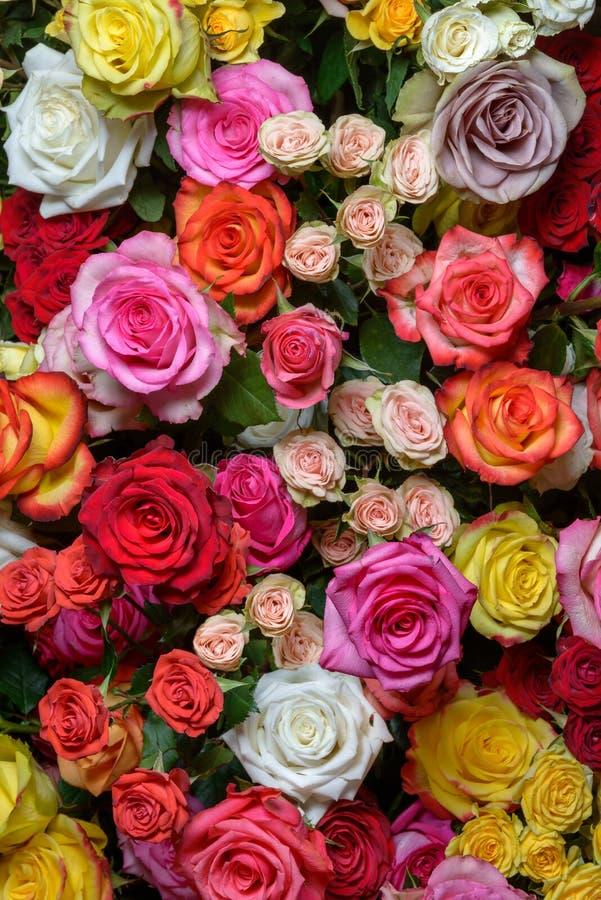 Download Rosas hermosas foto de archivo. Imagen de púrpura, manojo - 44854648