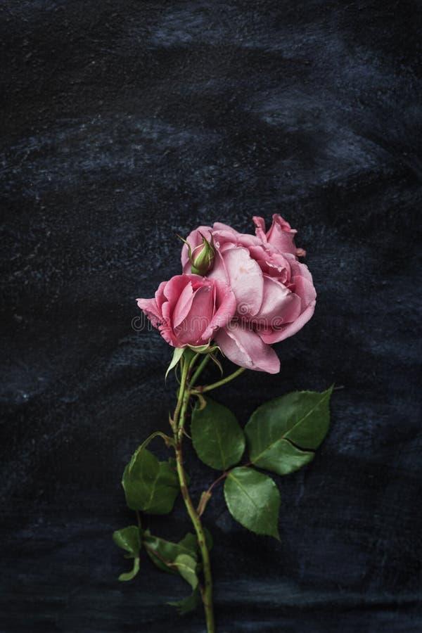 Rosas hermosas en cierre negro azul marino del fondo foto de archivo